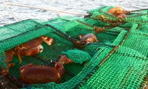 Krabbefiske red